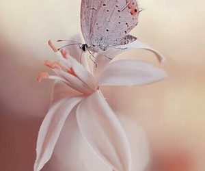 butterfly, nature, and pale image