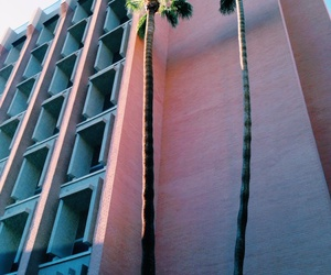 pink, building, and palm trees image