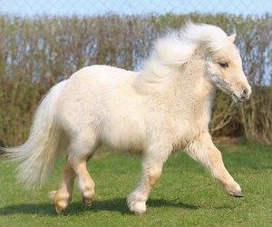 pony, horse, and animal image
