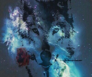 galaxy, rose, and wolf image