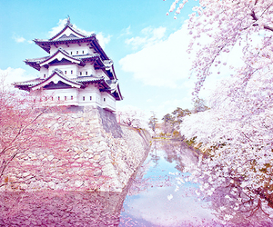 asia, beautiful, and sakura image
