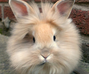 bunny, awesome, and funny image