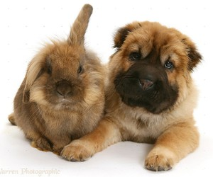 cute animals, puppy, and rabbit image
