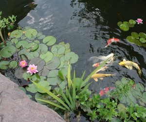fish, water, and nature image