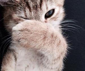 adorable, catnip, and pet image