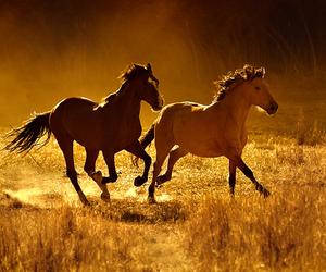 horse, animal, and free image