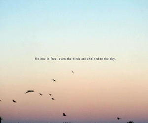 bird, sky, and free image