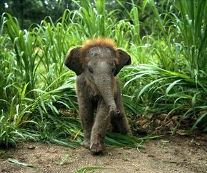 elephant, little, and cutie image