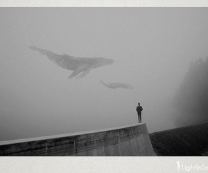 whale, black and white, and art image