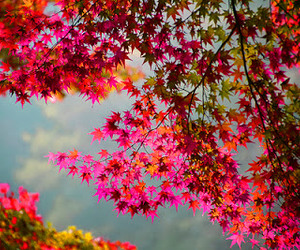 colorful, leaves, and nature image