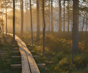 estonia, europe, and forest image