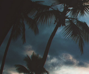 palms, nature, and sky image