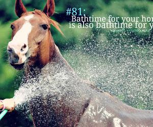 bath horse image