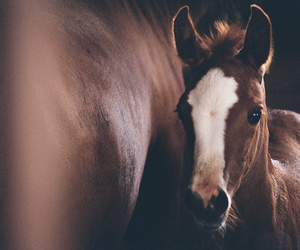horse, animal, and foals image