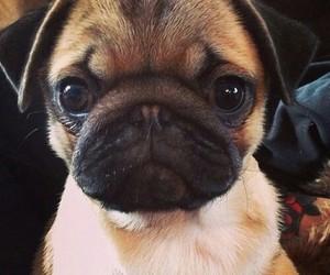 love cute dog beatiful image