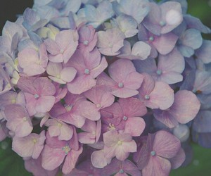 beautiful, flowers, and vintage image