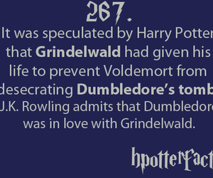 dumbledore, gay, and grindelwald image