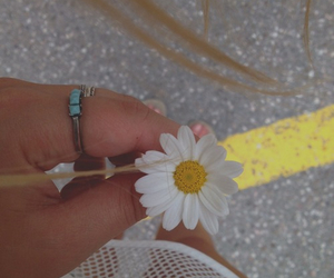 beautiful, daisies, and daisy image