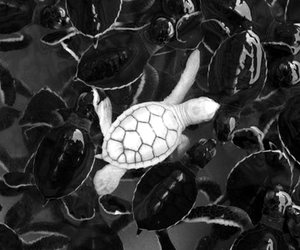 albinos and turtle image