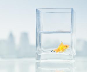 fish, yellow, and cute image