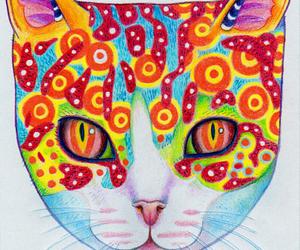 cat, colors, and colores image