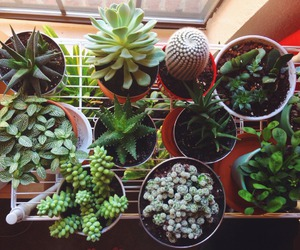 Dream, life, and plants image