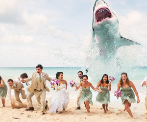 decoration, funny, and wedding day ideas image