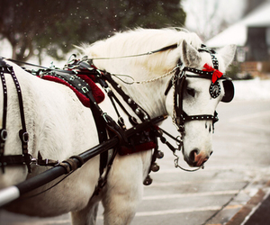 horse, white, and winter image