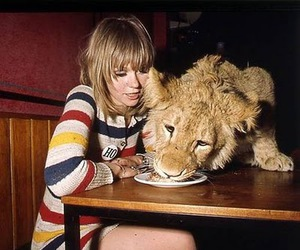 lion, food, and pet image