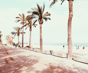Barcelona, beach, and palms image