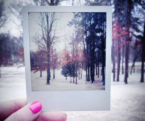 arm, nature, and polaroid image