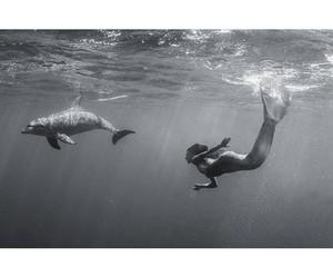 amazing, dolphin, and mermaid image