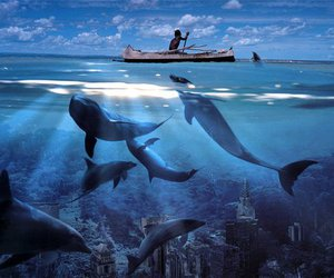 city, dolphin, and amazing image