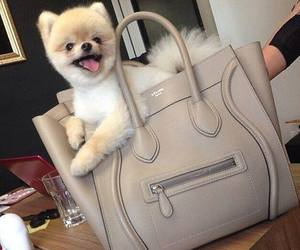 dog, cute, and bag image