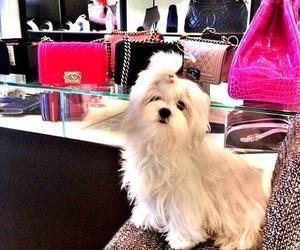 dog, fashion, and bag image