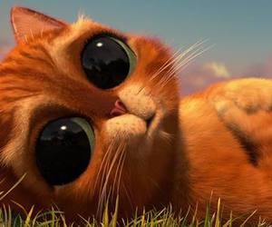 beautiful, cat, and cute image