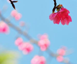 bokeh, branch, and cherry image