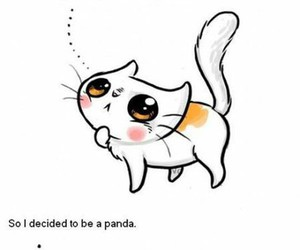 cat, panda, and funny image
