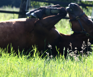 horse, pferd, and summer image