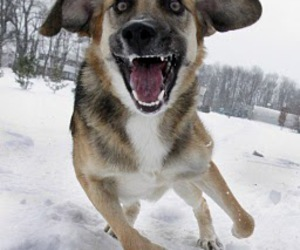 Action, crazy, and dog image