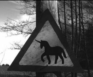 unicorn and black and white image