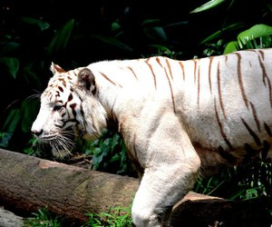 animal, tropical, and magnificent image