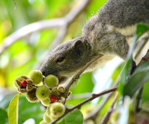 animal, squirrel, and tropical image