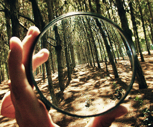 magnifying glass, nature, and trees image