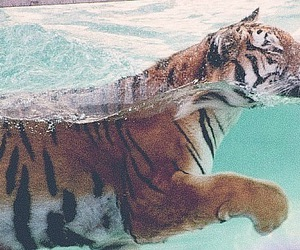 kitten, tiger, and pretty image