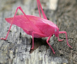 insect, pink, and pretty image