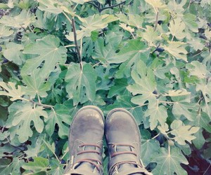 arbol, boots, and hojas image