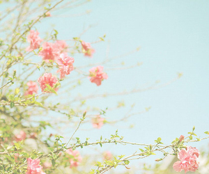 blue, sky blue, and flowers image