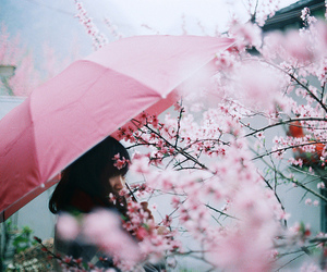 flowers, beautiful, and japan image