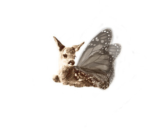 butterfly, vitbak, and deer image